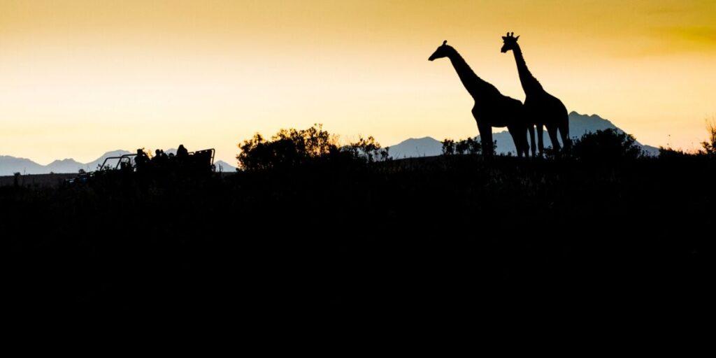 Sydafrika Rundtur & Safari