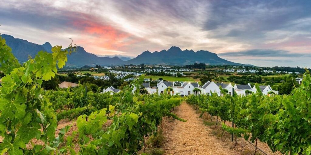 Cape Town - Golf & Vin